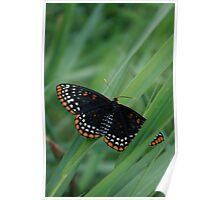 Tall Grass Butterfly Poster