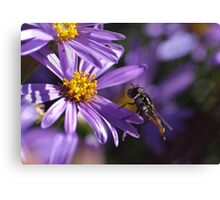 Purple daisy and Hover Fly 20091017 2797 Canvas Print