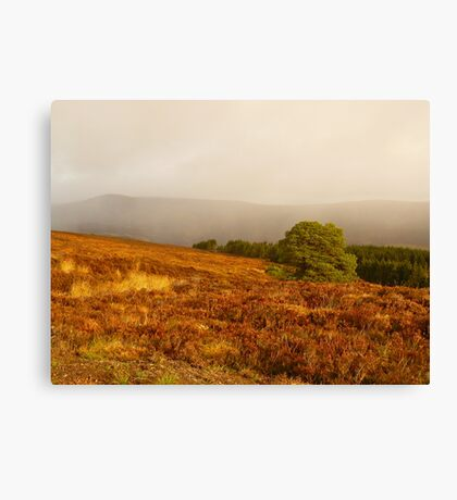 Changing Colours Canvas Print