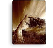 wind bent..... Canvas Print