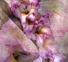 Pink Glads by designingjudy