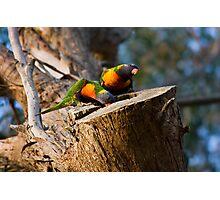 Tending the Nest Photographic Print