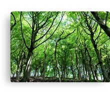 Sunlit Wood Canvas Print