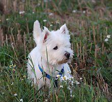 My dog crumb-8 by trainmaniac