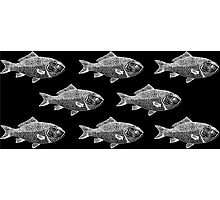 White Fish on Black Photographic Print