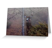 Big necked buck - White-tailed Deer Greeting Card