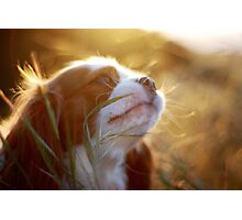 lucy in the sun Photographic Print
