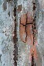Eucalypt Bark by Werner Padarin