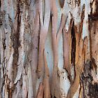 Eucalypt 11 by Werner Padarin
