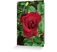 A Red Red Rose Greeting Card