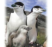 CHINSTRAP PENGUIN 6 by DilettantO
