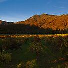 Sonoma Shadows at Sunset by MattGranz