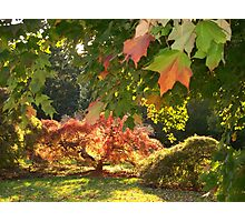 An  Autumn Scene   Photographic Print