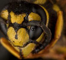 Yellow Jacket Macro by Douglas Gaston IV