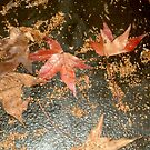 Autumn Leaves  by Ilunia Felczer