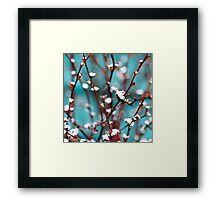 spring snow on barberry Framed Print