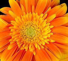 Let the Sun Shine! by Sue Morgan