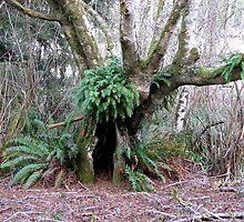 Hobbit Hidey-Hole by Beth Johnston