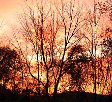 Autumn sky by Carol Knepp