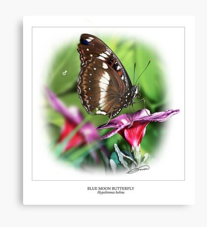 BLUE MOON BUTTERFLY 5 Canvas Print