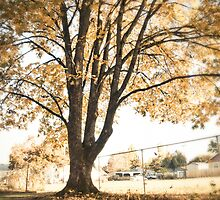 Tree by ElidArt
