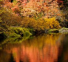 The Drama Of Autumn by Diane Schuster