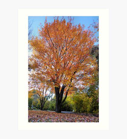 Autumn Colors Spectacular Art Print