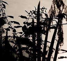 Nettles. by Rudywalsh
