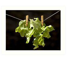 Drying salad Art Print