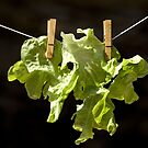 Drying salad by MelaB