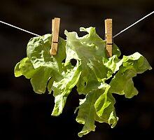 Drying salad by MelaB