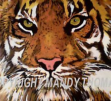 tiger bright by goldylonglocks