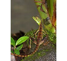 Geck Me Out Photographic Print