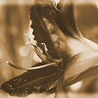 Having a Lily fun... by Micci Shannon