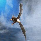 Wings by Gail Bridger