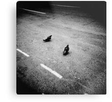 Lonely pigeons in London Metal Print