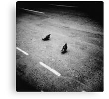Lonely pigeons in London Canvas Print