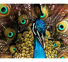 Peacock Pride Photographic Print