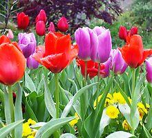 Mas Tulipanes by Esperanza Gallego