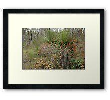 Nature's Decorators - Kennedia coccinea, Coral Vine Framed Print
