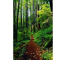 Kentucky Falls Trail #2 Photographic Print