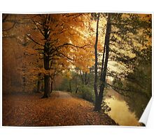A Leafy Path Poster