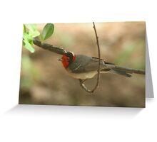 Warbler, Red-faced Greeting Card