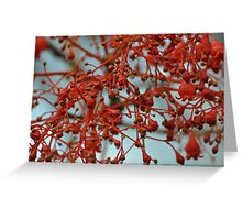 Flame Tree Blossoms Greeting Card