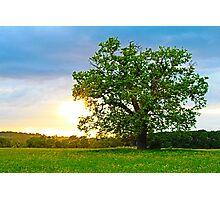 The Lone Oak Photographic Print