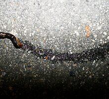Stepped on a Slug by Jake Sherman
