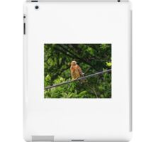 Hawk on The Wire iPad Case/Skin