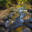 Autumnal Woodland Stream by David Lewins LRPS