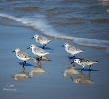 Let's Take that Stroll on the Beach by Sandy Woolard
