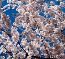 Cherry tree blossoms Sticker
